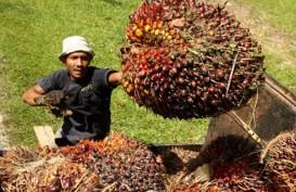 Harga TBS Riau Kembali Menguat