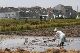 BI: Kredit Pertanian Banten Meningkat