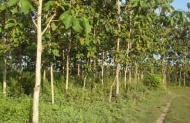 Pemerintah Daerah Berperan Dalam Penetapan Hutan Adat