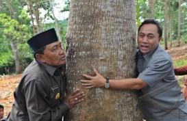 Hutan Adat: Potensi Membangun Ekonomi Kerakyatan
