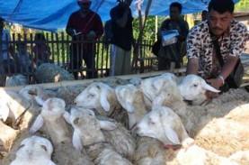 IDUL ADHA: Artha Graha Peduli Salurkan 350 Hewan Kurban