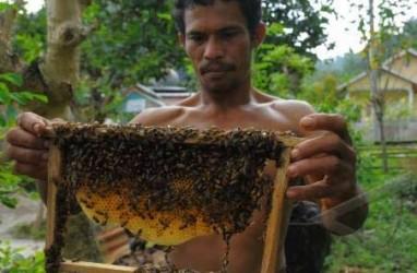 KAMPUNG CINGAGOLER: Pembudidaya Lebah Madu Akan Pameran di Italia