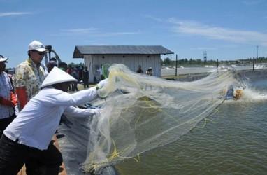 Petambak Benih Ikan di Kabupaten Bandung Susut