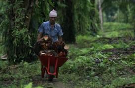 Jokowi Janji Bantu Kredit Petani Sawit