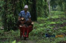 Austindo Nusantara Jaya Beli Seluruh Saham Pusaka Agro Makmur