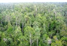 KAWASAN EKOSISTEM LEUSER: Pemda Aceh Tamiang Ajukan Anggaran Reforestasi