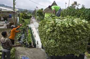 Industri Tembakau: Indonesia Berkomitmen Tidak Meratifikasi FCTC