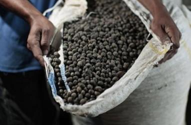 HARGA KOPI ROBUSTA (17 November 2014) : Awal Perdagangan Melemah 0,14%