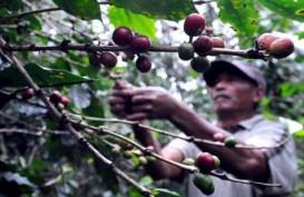 HARGA KOPI ROBUSTA (18 November 2014): Melemah 0,48% di Awal Perdagangan