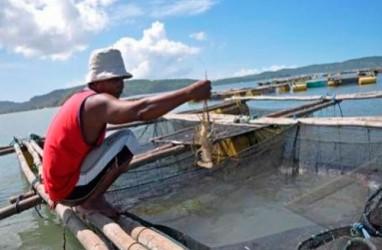 Benih Melimpah, KKP Dorong Budidaya Lobster