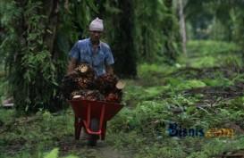 KONFLIK AGRARIA: Suku Anak Dalam Jalan Kaki ke Jakarta untuk Cari Keadilan