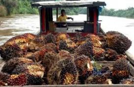 Harga CPO Merosot, Asian Agri Minta Aturan Campuran Biodiesel Dipertegas