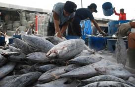 Kalbar Jamin Tak Ada Temuan Ikan Berformalin