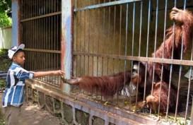 Ini Hiburan Akhir Tahun Baru Dan Natal Yang Disiapkan Kebun Binatang Ragunan