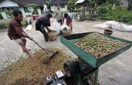 Harga Kopi Petani di Lampung Turun