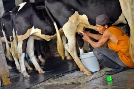 2015, Industri Susu Tak Akan Tambah Kapasitas Produksi