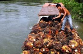 Harga TBS Riau Merangkak Naik