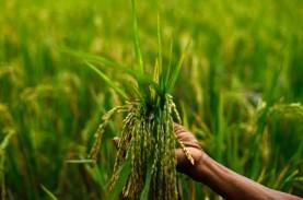 Ini Alasan Produk Pertanian Organik Belum Berkembang…