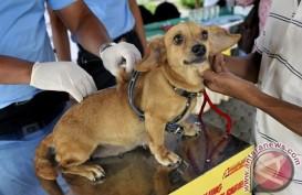 8 Orang Tewas Digigit Anjing, Kalbar Bisa Berstatus Kejadian Luar Biasa Virus Rabies