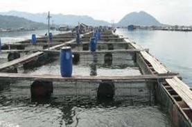 CUACA BURUK: Pemkab Agam Minta Tunda Tebar Benih Ikan