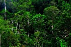 Gubuk Pembalak Liar Hutan Konservasi Dihancurkan Polisi