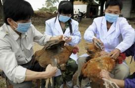FLU BURUNG: 30% Unggas Hidup Di Provinsi China Ini Terinfeksi H7N9