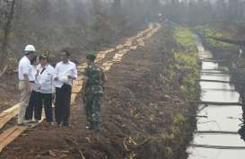 Jokowi: Kalteng Perlu Bangun Industri Hilir
