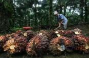 Pakistan Bakal Jadi Hub Kelapa Sawit Indonesia