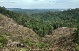 Kementerian LHK Akan Tindak Perambah Kawasan Hutan Rempang Galang
