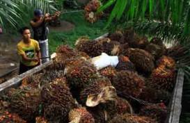 Penjualan London Sumatra Indonesia (LSIP) Turun 8,11 Persen