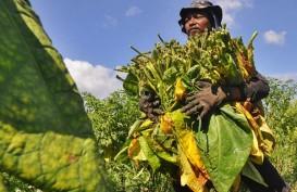 DPR: Petani Tembakau Harus Mendapatkan Perlindungan