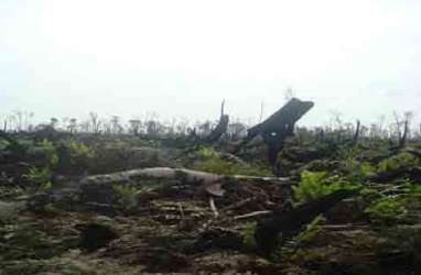 Hutan Adat di Dua Kantong Jokowi