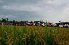 Mentan Panen Padi di Tuban dan Bojonegoro