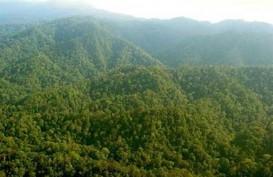 Hutan Adat, Kalbar Ajukan Tiga Lembaga Pengelola