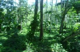 Pemerintah Tak Ragu Lepas Kawasan Hutan