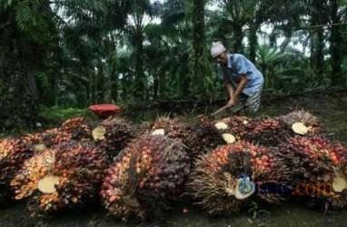 RSPO Targetkan 50% Lahan Sawit Tersertifikasi 2020