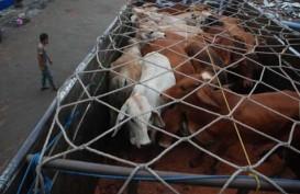 Jelang Puasa : Bandung Barat Surplus Sapi & Ayam