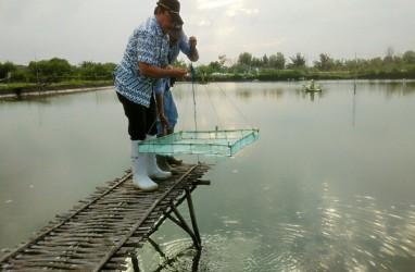 Kemenko Maritim Janji Atasi Problem Listrik di Tambak Udang Bratasena