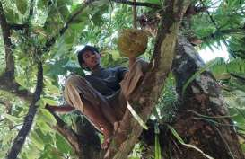 IPM Kalimantan Utara akan Berstatus Tinggi
