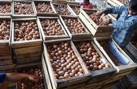DOC DIPANGKAS: Harga Telur Membaik