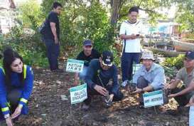 Pesisir Utara Kalbar Diramaikan Aksi Tanam Mangrove