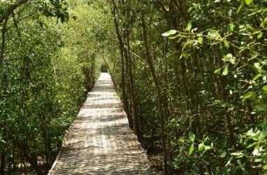 Pemerintah Rehabilitasi 500 Ha Mangrove pada 2017