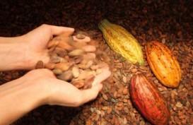 Pasokan Naik, Harga Kakao Tahun Ini Sulit Tembus US$2.000