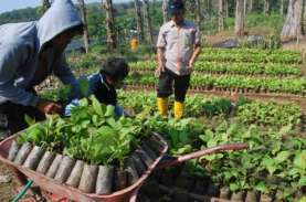 Perhutani Raup Laba Rp121 Miliar Pada Kuartal I/2017
