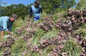 Petani Solok Keluhkan Anjloknya Harga Bawang Merah