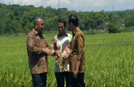 2045 Indonesia Lumbung Pangan Dunia, Ini Kata Mentan