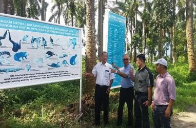 Anak Usaha Wilmar AMP Plantation Hijaukan Tepi Sungai Batang Masang