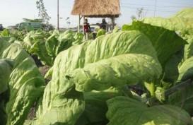 AMTI: Kebijakan Kemasan Polos Lemahkan Ekspor Tembakau Indonesia