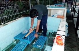 Ternyata, Pertumbuhan Ikan Lele Bisa Dirangsang Medan Listrik