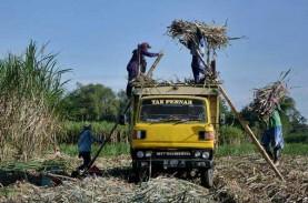 Omzet Kurang Rp4,8 Miliar Petani Tebu Dibebaskan dari…